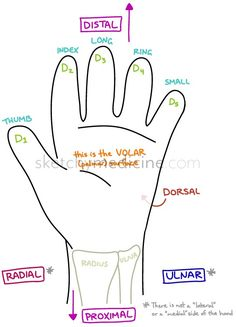 For being such a small anatomic location, people find it very difficult to describe where on the hand or digits things are actually happening when there is an injury. I think part of it stems back … Np School, Nursing Assessment, Medical Mnemonics, Complex Regional Pain Syndrome, Nursing Pins, Neuropathic Pain, Human Anatomy And Physiology, Medicine Journal, Medical Coding