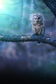 Scanning owl