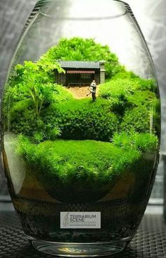 A step-by-step terrarium care guide. Learn about terraria and how to build and maintain one. DIY terrariums for various plants & growth. Terrarium Diy, Terrarium Containers, Moss Garden, Succulents Garden, Ideas Florero, Indoor Garden, Indoor Plants, Ferns Care, Pot Plante