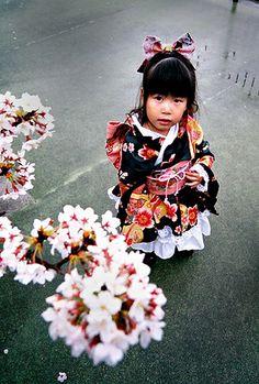kimono girl with sakura(Cherry Blossoms/tree depending upon context) Japanese Kids, Turning Japanese, Geisha, Beautiful Children, Beautiful People, We Are The World, Yukata, Japanese Kimono, Japanese Culture
