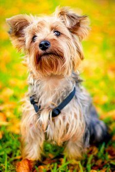 Mira 5 comportamientos raros de tu perro que indican que tiene graves problemas de salud... - Para Los Curiosos