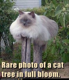 funny cat tree #cattree - More about Cat Tree at - Catsincare.com!