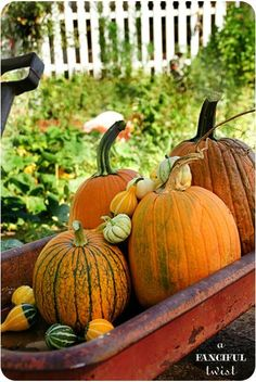 Great idea for the garden:pumpkins and gourds in an old radio flyer red wagon! Love It!