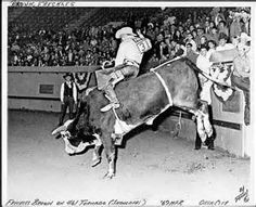 1967 National Finals Rodeo, OK City - at 46 year old Freckles Brown rides the impossible bull, Tornado. The greatest ride in rodeo history..