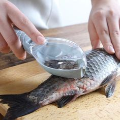 """Universe of goods - Buy """"Fish Skin Brush Scraping Fishing Scale Brush Graters Fast Remove Fish knife Cleaning Peeler Scaler Scraper mutfak malzemeleri"""" for only USD. Cool Kitchen Gadgets, Kitchen Items, Kitchen Hacks, Kitchen Tools, Cool Kitchens, Kitchen Cleaning, Kitchen Dining, China Kitchen, Buy Kitchen"""