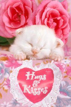 Imagen animada de lindo gatito con detalles y gesto de amor rosas y corazón