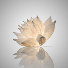 Light Sculpture I Oznoon Lotus Sculpture, Sculpture Art, Diy Luminaire, Ceiling Murals, Ceiling Hanging, Nature Story, Lampe Decoration, Free To Use Images, Paperclay