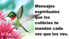 9 spiritual messages that hummingbirds are trying to send you Spiritual Messages, Little Birds, In Loving Memory, Prayers, Cute Animals, Spirituality, Faith, Thoughts, How To Plan