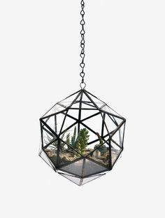 Modern Hanging Flower Planters Design as Home Accessory Ideas Hanging Terrarium, Glass Terrarium, Hanging Planters, Succulent Terrarium, Wall Planters, Hanging Basket, Air Plants, Indoor Plants, Indoor Cactus