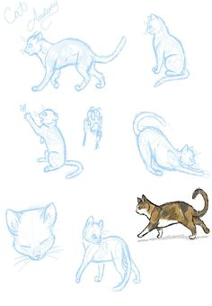 Cat Anatomy Practice...? by SasoriDanna94
