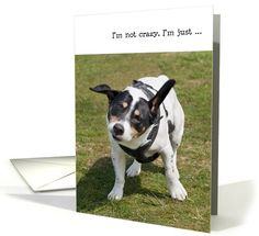 Humorous Birthday Card - Funny Dog | Humor | Greeting Card Universe