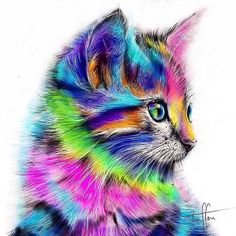 Amazing cat art! Indonesia Traveler Official on Instagram: Follow my favorite…