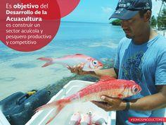 Es objetivo del Desarrollo de la Acuacultura es construir un sector acuícola y pesquero productivo y competitivo. SAGARPA SAGARPAMX #SomosProductores