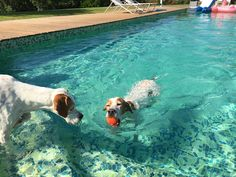 Pointer Pool Party