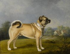 This favoured pug | Community Post: The 14 Proudest Pugs In The History Of Art