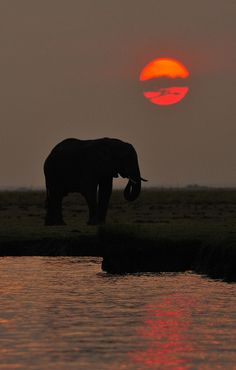 African sunset (DS Lewis)