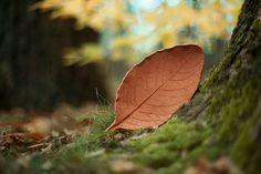 Leaf ceramics