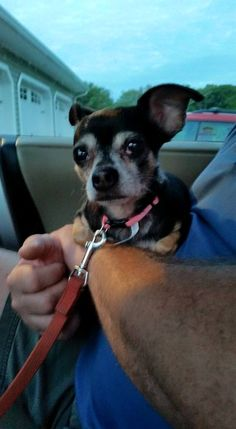 Lisa Kaczenski CorsaroCT Lost Pets July 4 ·    Found tonight very friendly chihuahua Bethany CT Hinman Rd/Bethmour Rd/Schaffer Rd area. Pink collar no tags.