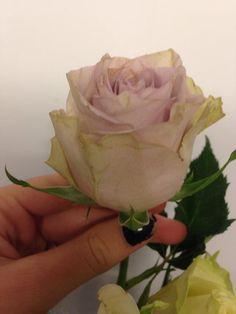 Rose - Silverado Denne fargen står for: Jeg ønsker deg lykke og hell. Den Symboliserer også for: mistenksomhet og misunnelse