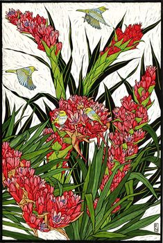 Australian Flowers - Linocuts — Rachel Newling Flower Prints, Flower Art, Flannel Flower, Australian Native Flowers, Kangaroo Paw, Linoprint, Tropical Flowers, Animal Drawings, Wall Art Prints