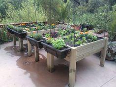 Un huerto en casa. La Permacultura Urbana.