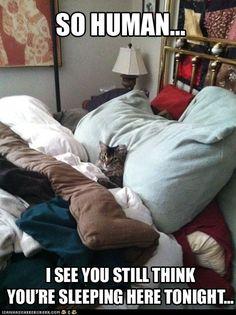 Hahahahahahahahahaha I love cats! - BleuVous.com