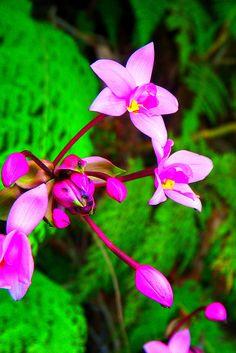 Hawaiian flower, Kauai