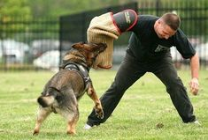 How to deal with German Shepherd biting problem