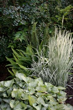 My Favorite Plant Combinations 4