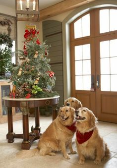A Canine Christmas ...beautiful shot ! Look at Mr. Smiley on the right! Sweet babies.
