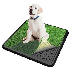 Pooch Pad's CLASSIC features Pooch Turf synthetic grass with Rapid Flow Drainage. Pooch Pad Indoor Turf Dog Potty CLASSIC includes 1 tray and 1 Pooch Turf grass mat + a FREE sample of Pooch Pad Potty Training Attractant. Service Dog Training, Dog Training Pads, Training Your Dog, Training Tips, Potty Training, Training Collar, Training Classes, Agility Training, Dog Agility
