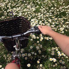 Lila riding her bike through daisies