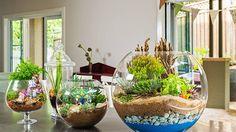 Create a mini garden in a glass bowl- it's the ultimate small garden!