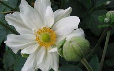 Plants, Organic Gardening, Shade Perennials, Lawn And Garden, Plant, Planting, Planets