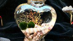 Zen Living marimo ball in heart terrarium seascape by EclecticZen, $20.00