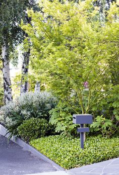 Front Yard Garden Design A steel mailbox sits in front of a lush, soft and textural garden in Melbourne designed by Vivid Design. Front Yard Garden Design, Front Yard Landscaping, Landscaping Ideas, Natural Landscaping, Yard Design, Small Front Gardens, Australian Garden, Low Maintenance Garden, Outdoor Garden Furniture