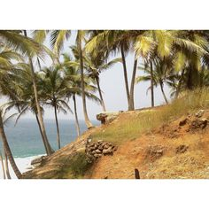 Palm hiking. kat  #kerala #coastline #india #palmtrees