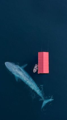 Whale Aerial Wallpaper for iPhone and Android L Wallpaper, Wallpaper Backgrounds, Phone Wallpapers, Aerial Photography, Art Photography, Cityscape Photography, Night Photography, Landscape Photography, Image Nature