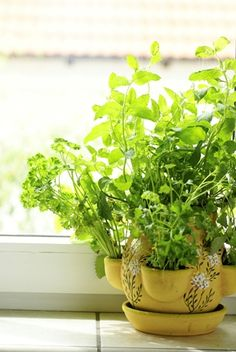 If you're new to herbs, start slow. Chives, parsley and mint are the easiest herbs to grow. Here are some tips to start your own indoor herb garden. @Troy Parquer Parquer Parquer-Bilt