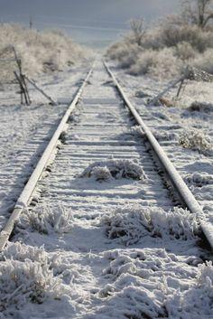 San Carlos Apache Rez ,winter tracks Moccasin ➳Tracks