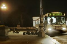 Just some raccoons waiting for the bus.