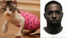 Maximum penalty for Tennessee man that set kitten on fire. The kitten, Katniss died as a result of the her horrible injuries. Police officers from Cleveland, Bradley County, Tennessee have managed to identify the man that set a helpless kitten on fir. Cane Corso, Sphynx, Chinchilla, Pitbull, Stop Animal Cruelty, Save Life, Animal Rights, Wild Life, Otter