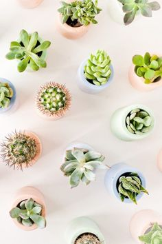 A cactus is a superb means to bring in a all-natural element to your house and workplace. The flowers of several succulents and cactus are clearly, their crowning glory. Cactus can be cute decor ideas for your room. Diy Plaster, Cactus Plante, Deco Nature, Plants Are Friends, Plant Aesthetic, Aesthetic Art, Aesthetic Yellow, Deco Floral, Cactus Y Suculentas