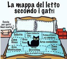 Lettogatto - #Lettogatto