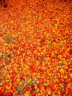 Maple carpet*** Shag Rug, To Go, Carpet, Rugs, Abstract, Places, Artwork, Home Decor, Shaggy Rug