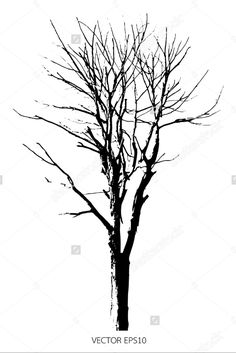 Silhouette dead tree or dry tree isolated on white background. #tree #dead #dry #nature #isolate #white #background