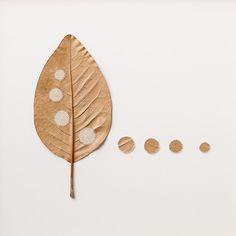 Four Circles by Susanna Bauer. 38 H x 38 W cm. Magnolia leaves, cotton yarn.