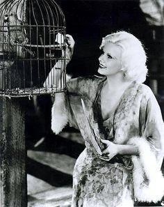 Jean Harlow #bird #birdcage #parrot