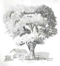 Bildergebnis für Tree Drawings in Pencil