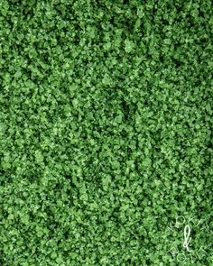 Grass Seed, Lawn Seed, Rye Grass, Growing Grass From Seed, Drought Tolerant Grass, Clover Lawn, Grass Alternative, Flying Flowers, Low Maintenance Landscaping